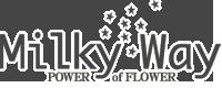 名古屋市栄の花屋|ミルキーウェイ|Milky Way